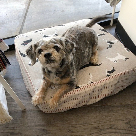 custom boat beds for dogs